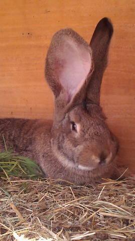 Флудильня о кроликах - Страница 16 5102875_m