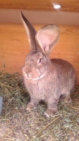Флудильня о кроликах - Страница 16 5102905_m