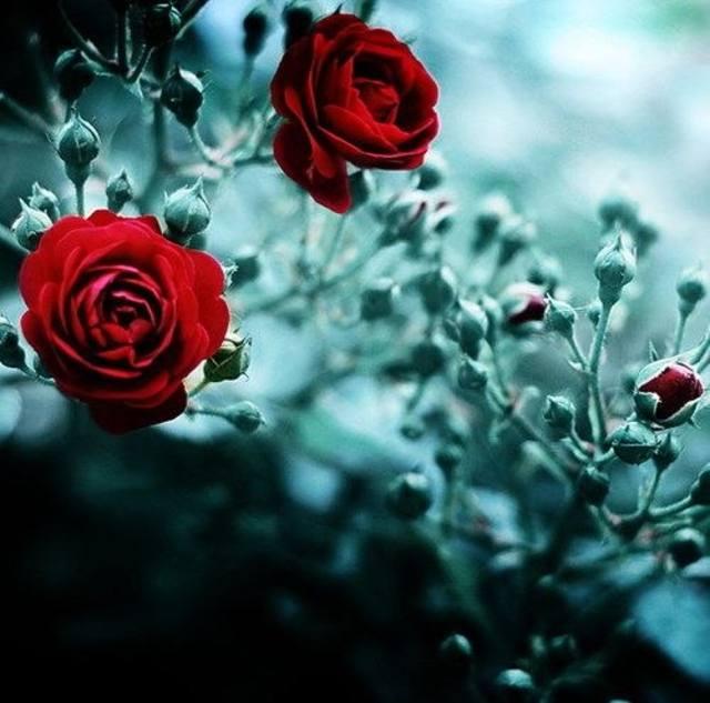 http://images.vfl.ru/ii/1400272211/9685aff0/5156725_m.jpg