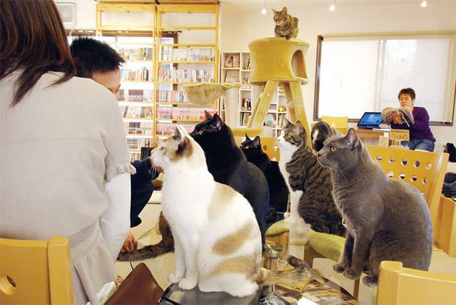 Кошки (Cats) - Page 3 5308755_m