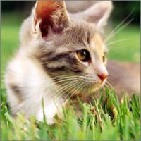 http://images.vfl.ru/ii/1401627144/f7e2637d/5309297_m.jpg