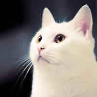 http://images.vfl.ru/ii/1401627287/c06fb0d1/5309322_m.jpg