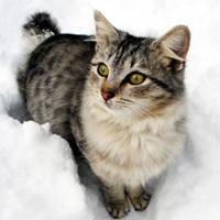 http://images.vfl.ru/ii/1401627604/480ca064/5309376_m.jpg