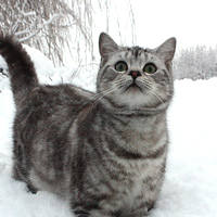 http://images.vfl.ru/ii/1401627604/8e781a96/5309375_m.jpg