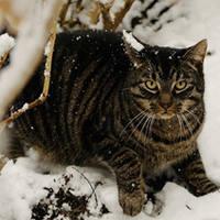 http://images.vfl.ru/ii/1401627900/f3cfda01/5309427_m.jpg