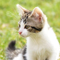 http://images.vfl.ru/ii/1401627977/fcb46cea/5309455_m.jpg