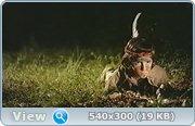 http//images.vfl.ru/ii/1402406094/d05a9732/5394267.jpg