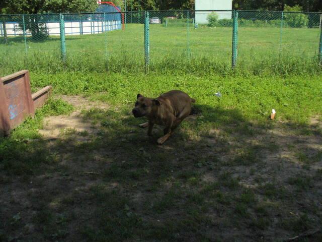 http://images.vfl.ru/ii/1403418954/b029ebf2/5497436_m.jpg