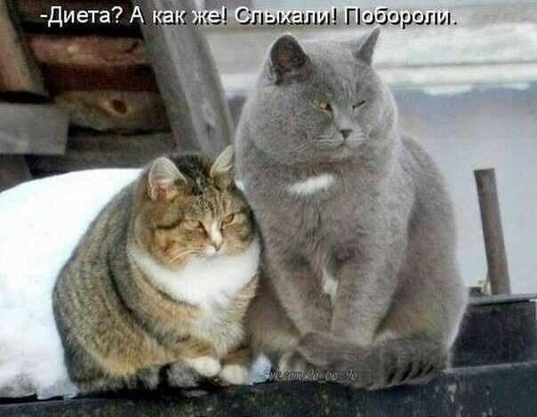 http://images.vfl.ru/ii/1404414437/ea94b1c6/5615893_m.jpg