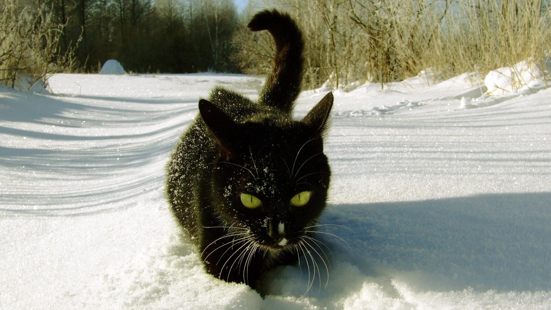 http://images.vfl.ru/ii/1404767636/67b967fc/5648223.jpg