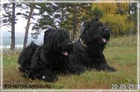 http://images.vfl.ru/ii/1405348268/74c3a0ec/5707970_s.jpg