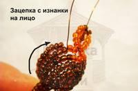 http://images.vfl.ru/ii/1407620988/fca7c182/5950263_s.jpg