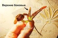 http://images.vfl.ru/ii/1407624635/4212f269/5950355_s.jpg