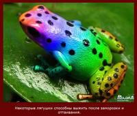 http://images.vfl.ru/ii/1408508211/8e476566/6058090_s.jpg