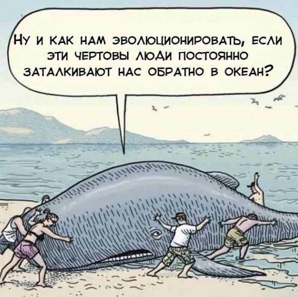 http://images.vfl.ru/ii/1409135114/56b06362/6141365.jpg