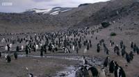Чудо животного мира / Wonder of Animals (2014) HDTVRip