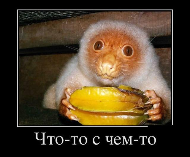 http://images.vfl.ru/ii/1411031760/922c9fb0/6372407_m.jpg