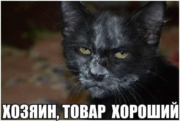 http://images.vfl.ru/ii/1411031760/f6b6fb29/6372406_m.jpg