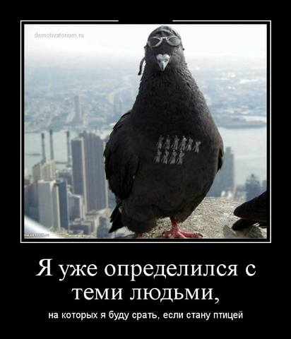 http://images.vfl.ru/ii/1411031761/14edf312/6372408_m.jpg