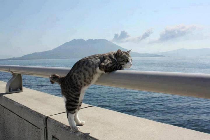 Кошки (Cats) - Page 3 6470075_m
