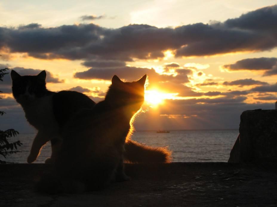 Кошки (Cats) - Page 3 6470081_m