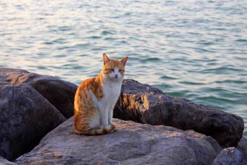 Кошки (Cats) - Page 3 6470080_m