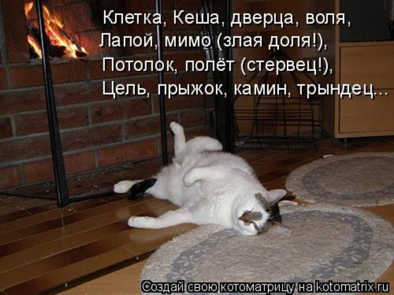 Кошки (Cats) - Страница 4 6473252_m