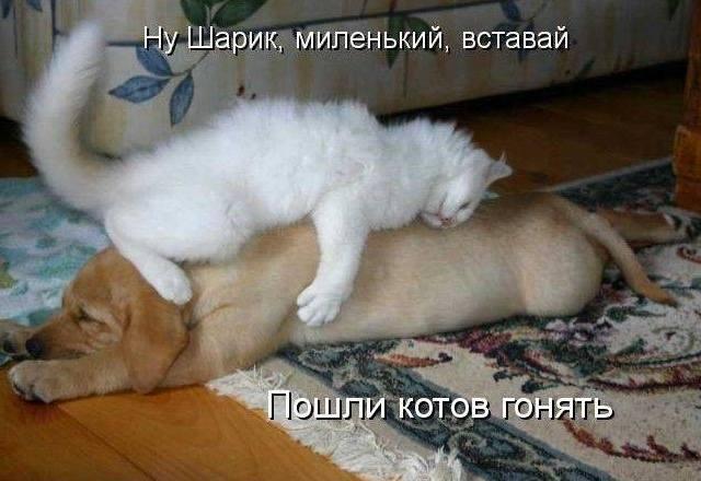 Кошки (Cats) - Страница 4 6479985_m