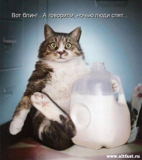 Кошки (Cats) - Страница 4 6479984_m