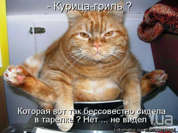 Кошки (Cats) - Страница 4 6479982_m