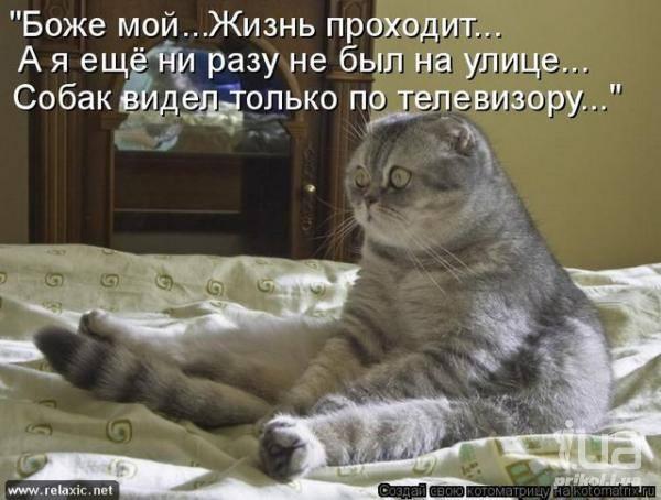 Кошки (Cats) - Страница 4 6479983_m