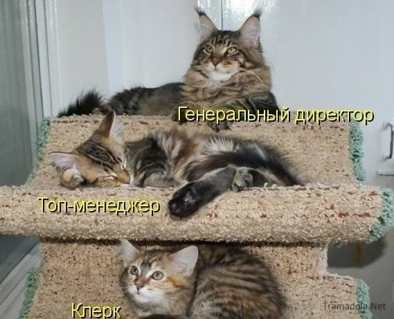 Кошки (Cats) - Страница 4 6479987_m