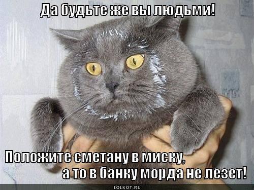 Кошки (Cats) - Страница 4 6479986_m