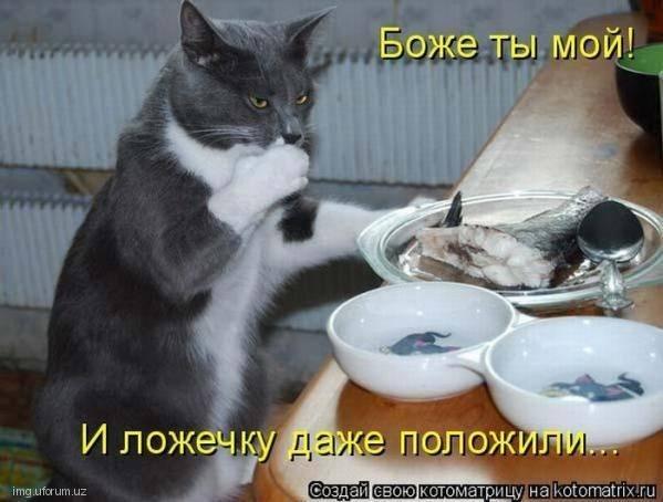 Кошки (Cats) - Страница 4 6479989_m