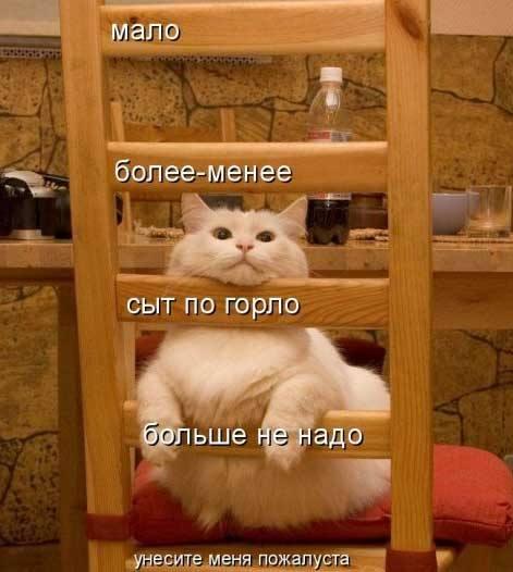 Кошки (Cats) - Страница 4 6479988_m