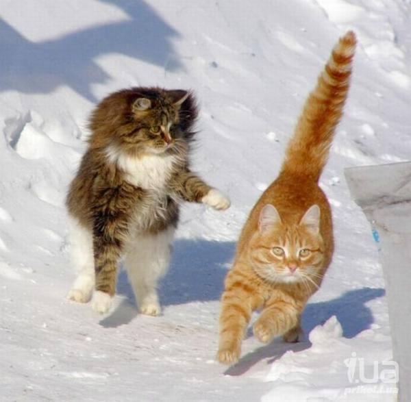 Кошки (Cats) - Страница 4 6480112_m