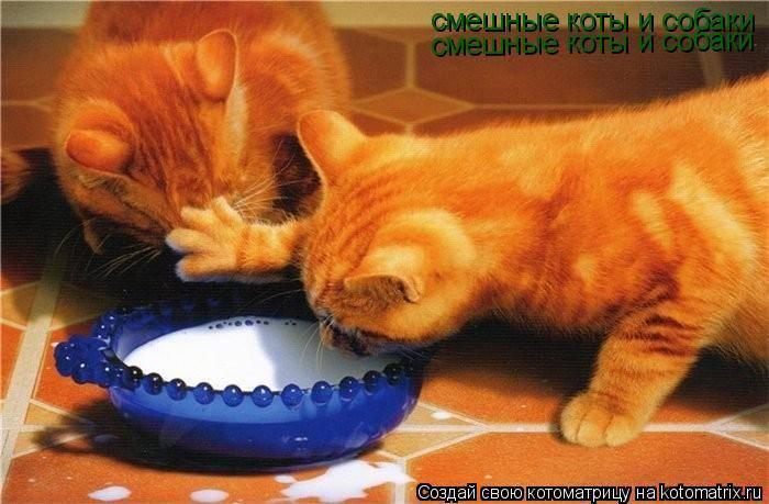 Кошки (Cats) - Страница 4 6480113_m
