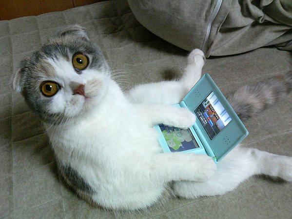 Кошки (Cats) - Страница 4 6480116_m