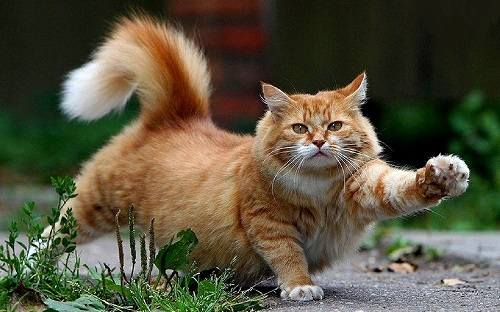 Кошки (Cats) - Страница 4 6480118_m