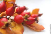 Овощи, фрукты, еда 6518830_s