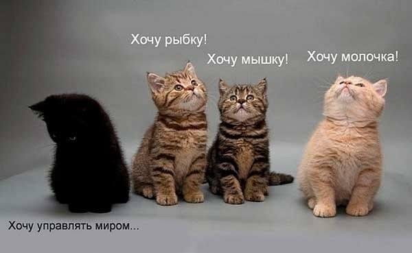 http://images.vfl.ru/ii/1412590647/64506f91/6563404_m.jpg