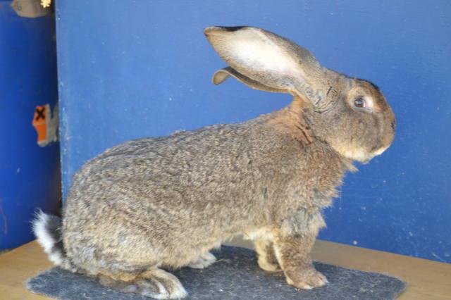 Оптимальный репродуктивный возраст кроликов 6625818_m