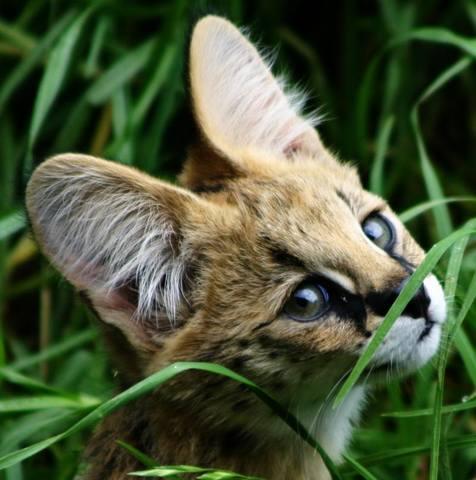 Кошки (Cats) - Страница 4 6659891_m