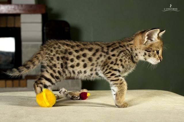 Кошки (Cats) - Страница 4 6659890_m