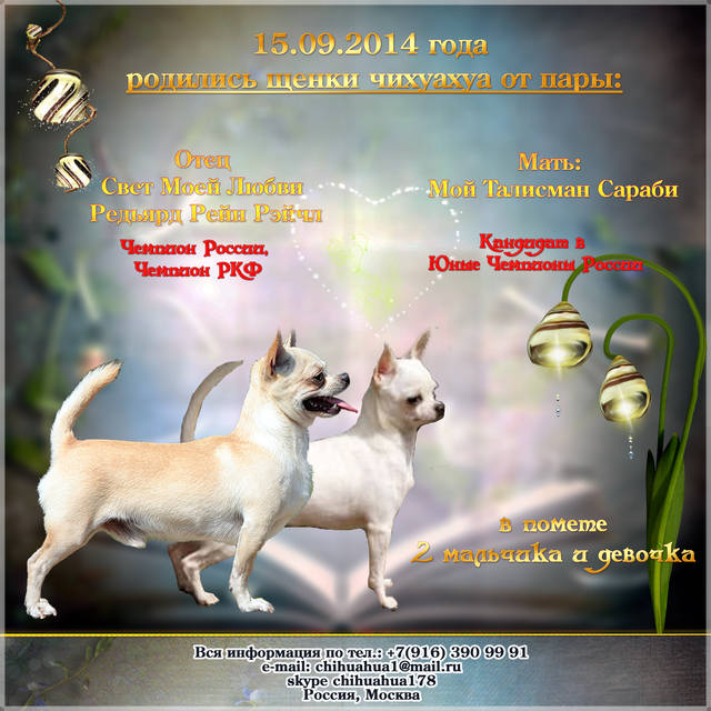 http://images.vfl.ru/ii/1414279668/606a03f2/6750063_m.jpg