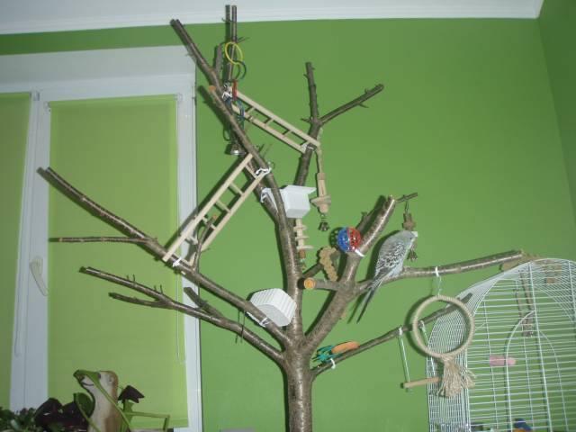 Дерево для попугаев своими руками 575