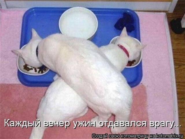 http://images.vfl.ru/ii/1414580081/4243fb23/6785600_m.jpg