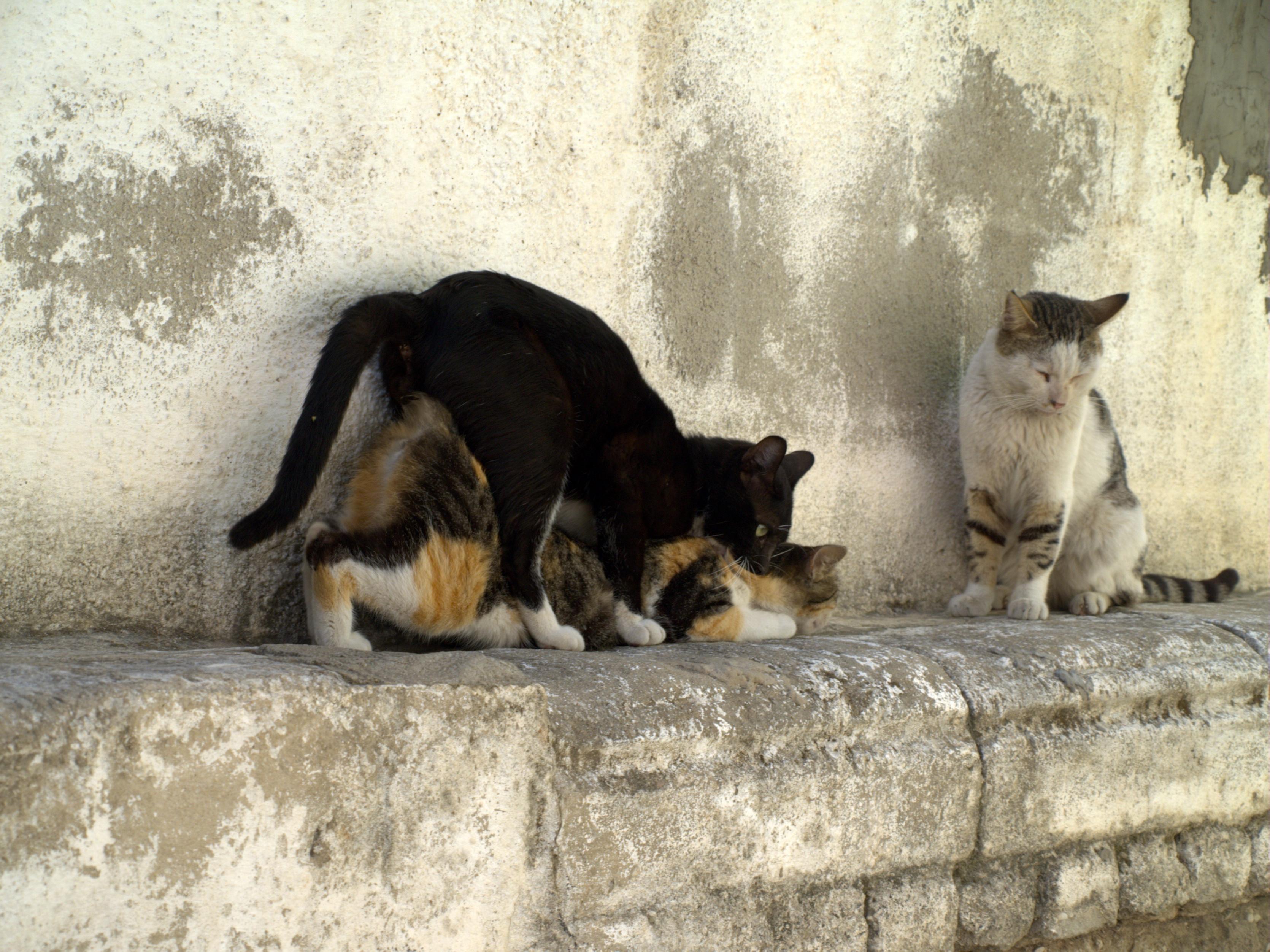 Секс с кошками фото 4 фотография