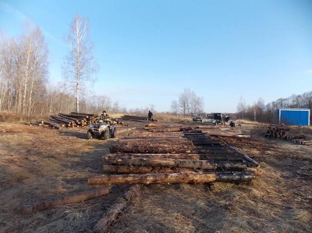 В «Смоленском поозерье» будут разводить зубров 7102899_m
