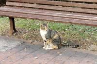 http://images.vfl.ru/ii/1417548903/5eee3c66/7119217_s.jpg